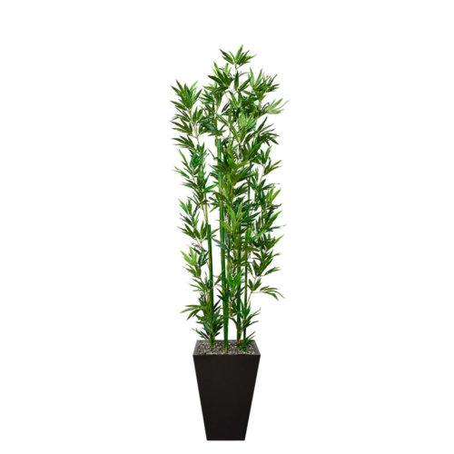 Bambu_Verde